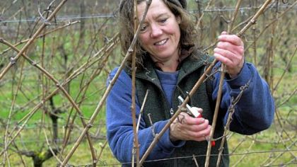 Betsey Wittick prunes Muller-Thurgau vines at Bainbridge Island Vineyards & Winery on Bainbridge Island in Washington.
