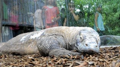 The Komodo dragon exhibit is just one of many activities at Pittsburgh Zoo & PPG Aquarium.