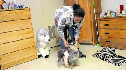 Sophomore Michelle Kelly, 19, of Severn, Md., plays with Lady, her 3-year-old Yorkie-Poo, in her dormitory at Washington & Jefferson College.