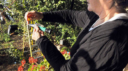 Suzy Meyer squeezes the juice from a tomato onto a refractometer, which measures the brix level of the fruit.